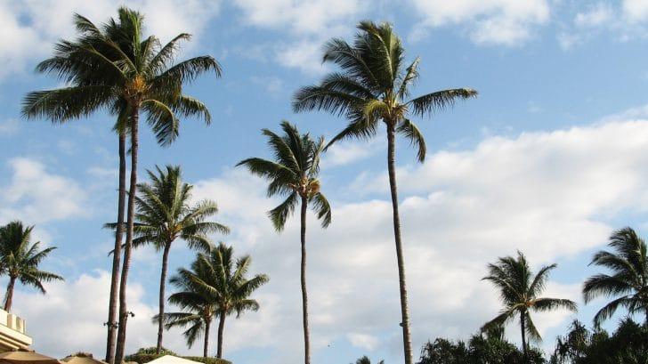 マウイ島の天候の特徴